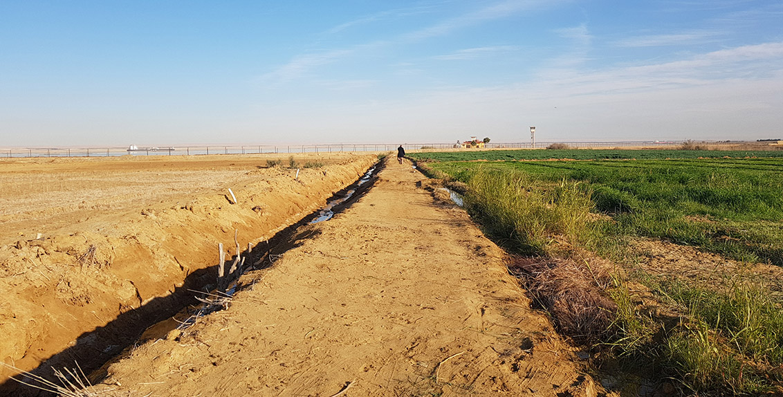 The effect of reclamation efforts is clearly seen in Suez, Egypt (a reclaimed salt-affected land plot is shown on the right, and a non-reclaimed salt-affected land plot on the left; both plots share the same soil properties).