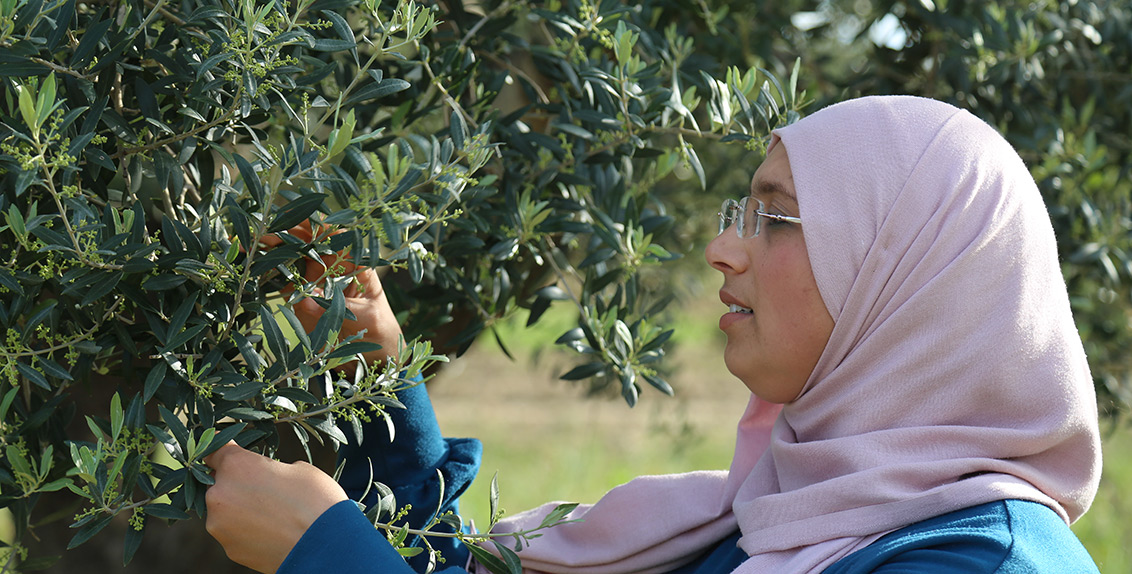 """Another winner of the grant Dr. Amani Bchir, a research associate at the Olive Tree Institute, University of Sfax, Tunisia, who worked with Dr. David Mulla from the University of Minnesota, says: """"It was a good opportunity for me as a woman researcher from North Africa to receive this grant."""""""