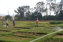 Training farmers to cope with salinity in Ethiopia