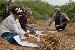 The improved lines were first tested in different agroecological zones from Tashkent Region and the Syrdarya River basin to sandy soils of the Kyzylkum desert. A special focus was made on the introduction of quinoa in marginal lands of the Aral Sea area, a region with low-yielding and extremely saline soils.